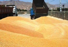 حمل و نقل گندم بدون اخذ مجوزهای لازم از مسئولین ذیربط ممنوع است